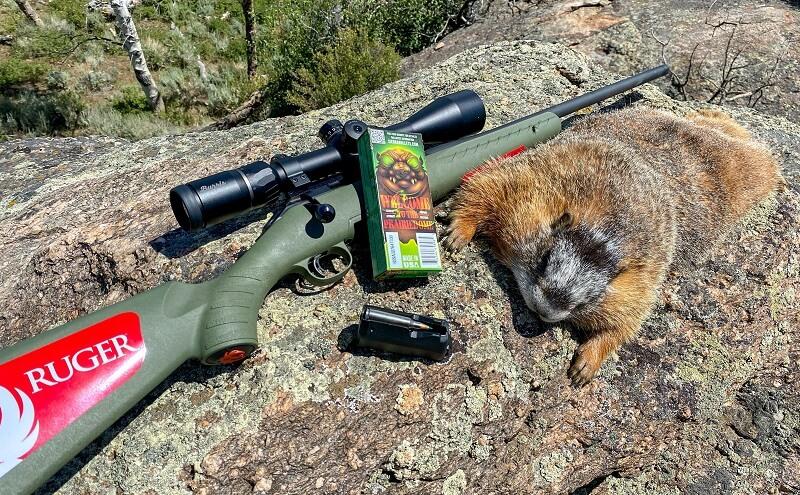 Sierra Bullets vs Pest